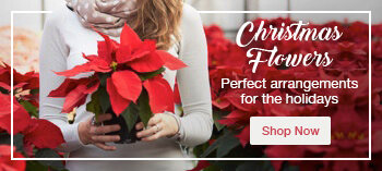 View our Christmas flower range
